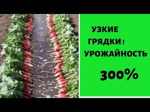 Огород по курдюмову - личный опыт (ну и немножко про сорняки)