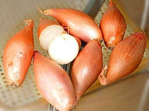 Многообразие овощных луков и их использование