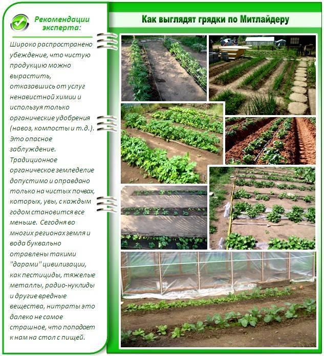 Повышаем урожайность с грядками по митлайдеру