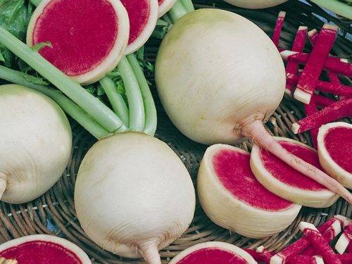 Японская редька дайкон: полезные свойства и противопоказания, применение в народной медицине, косметологии, кулинарии