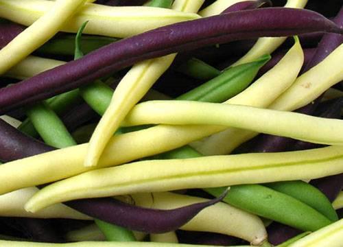 Чем полезна белая фасоль, свойства и приготовление