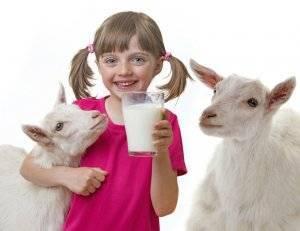 Сколько в сутки молока дает коза