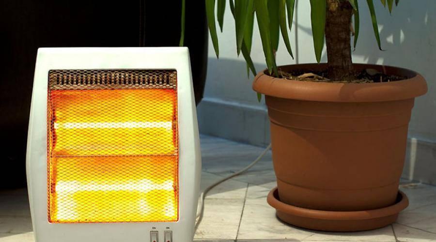 Цыплята и температурный режим, содержание в домашних условиях