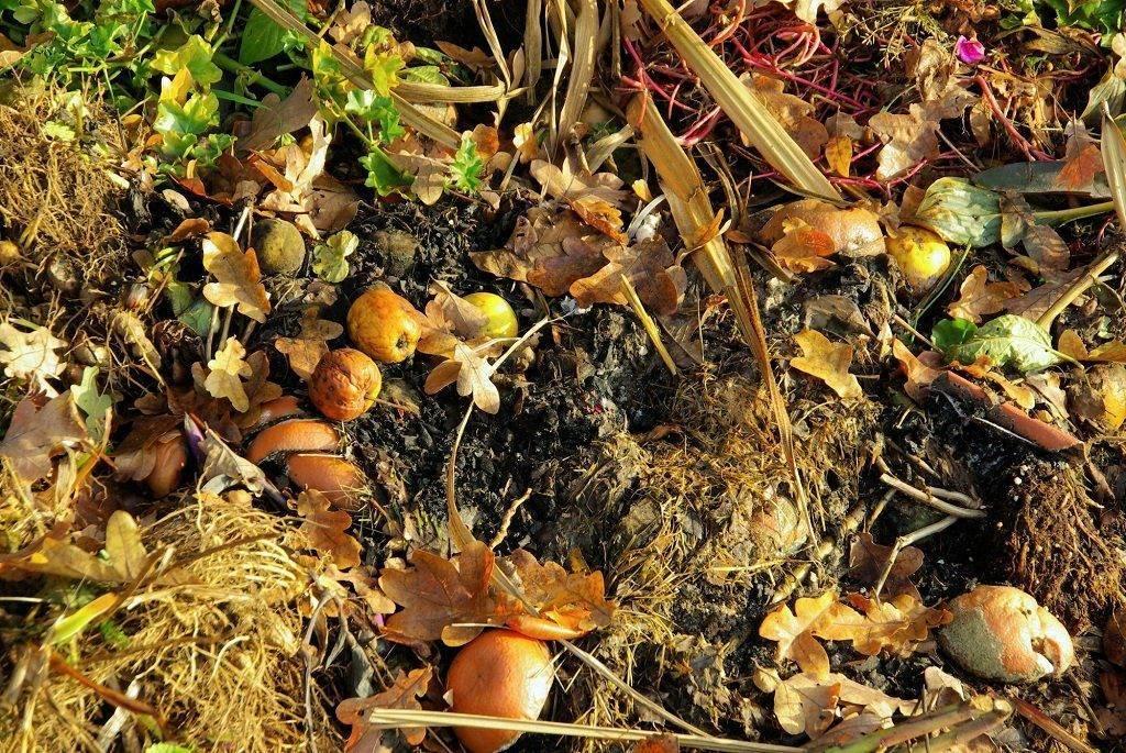 Весенняя подкормка клубники и малины