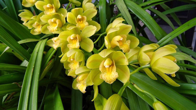 Каких вредителей орхидей фаленопсис стоит опасаться? их фото и методы лечения