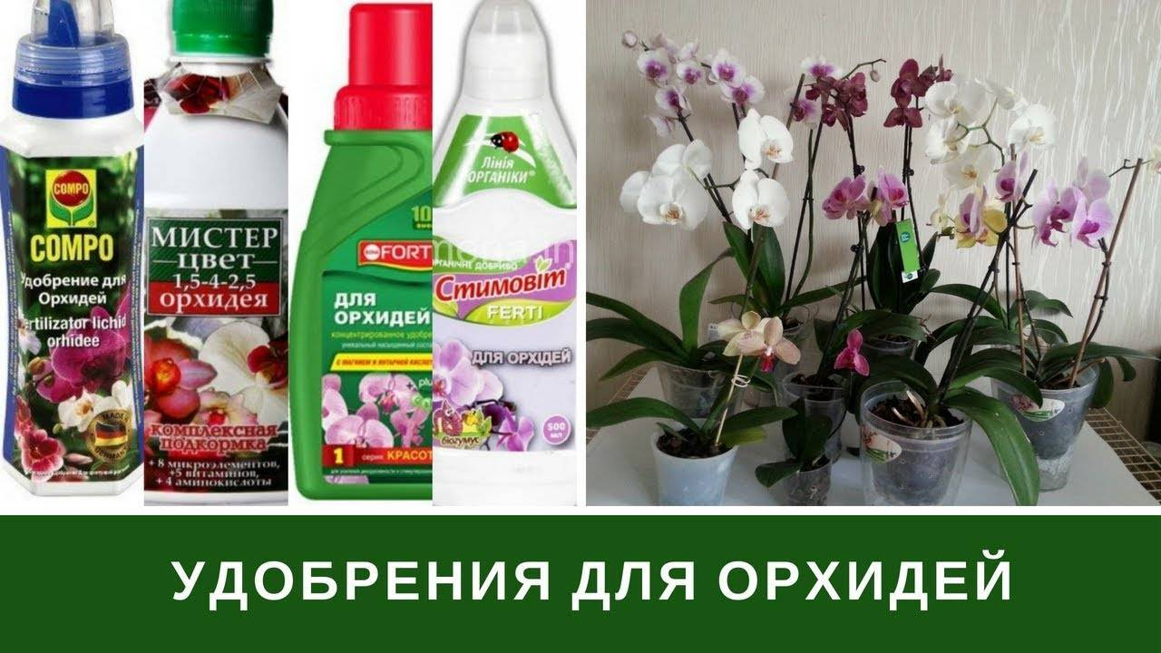 Подбираем грунт для орхидей фаленопсис