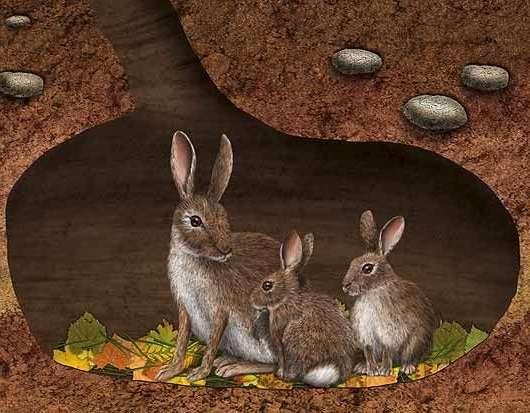 Разведение кроликов как бизнес: идея и бизнес-план