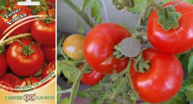 Топ-10 самых крупных сортов томатов от читателей огород.ru