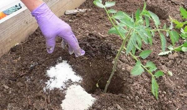 Польза минеральных удобрений для рассады и взрослых томатов. виды и применение подкормок