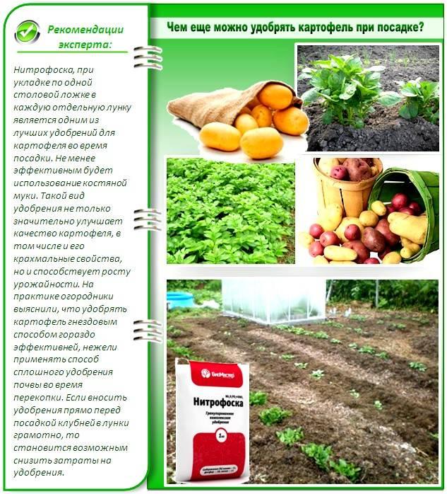 Предпосадочные удобрения для картофеля