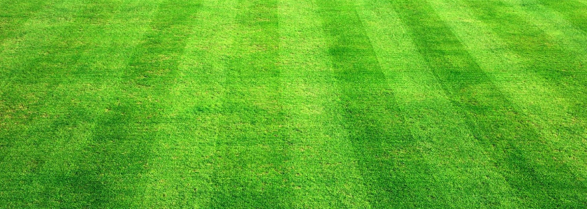 Уход за газоном, секреты идеальной лужайки