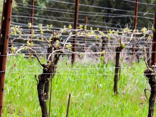 Изготавливаем шпалеру для винограда своими руками — шпалера как основа урожайности