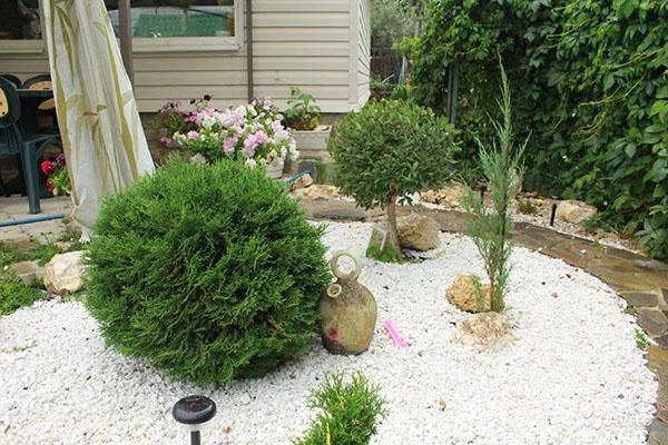 Особый шарм придаст садовому участку туя Тини Тим