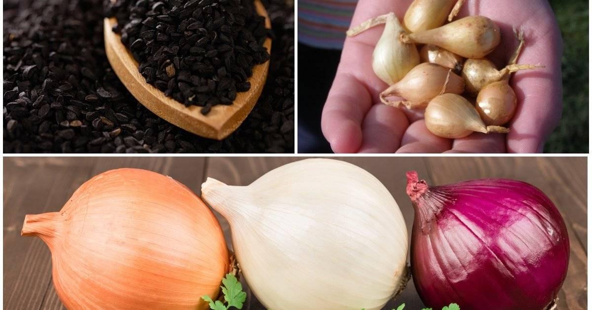 Как вырастить шнитт-лук на подоконнике—  советы от опытных садоводов
