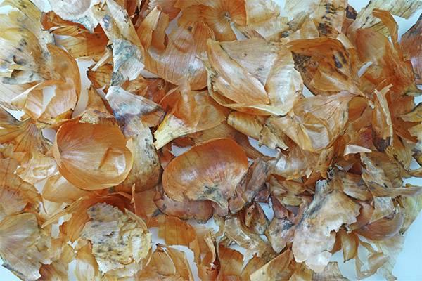 Польза и вред луковой шелухи для организма, правила использования
