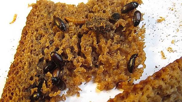 Генеральная уборка у жуков знахарей