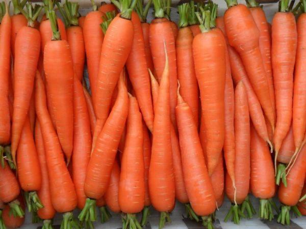 Морковь: польза и вред для организма. состав, лечебные свойства и отзывы