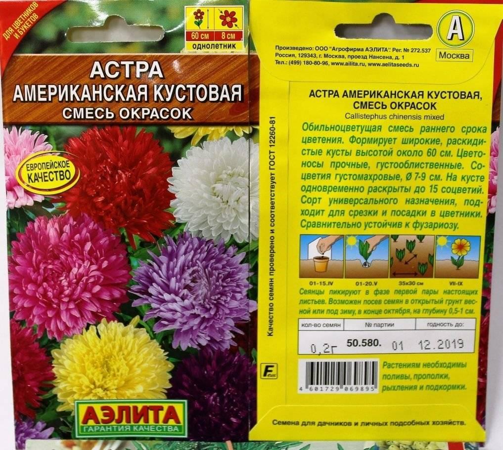 Правила и схема выращивания астр из семян
