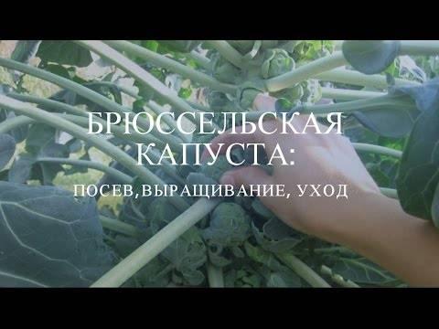 Секреты приготовления брюссельской капусты