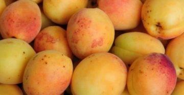 В чем разница между абрикосом и жерделой?