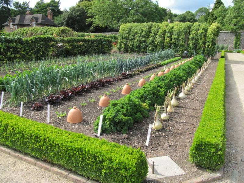 Систематизируем посадку культур на дачном участке соблюдая правила севооборота на огороде
