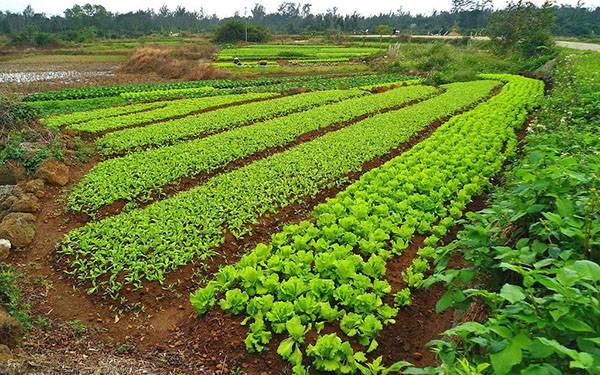 6 экологически чистых способов повысить плодородие почвы