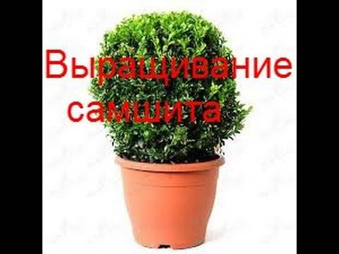 Энциклопедия бонсай