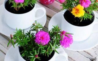 Список красивых и неприхотливых растений для ленивого цветовода (фото)
