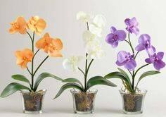 Многообразие домашних видов суккулентов. статья для начинающих цветоводов