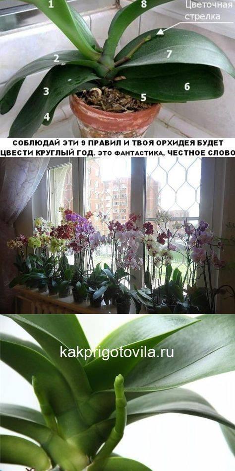 Размножение орхидей без проблем при помощи цитокининовой пасты