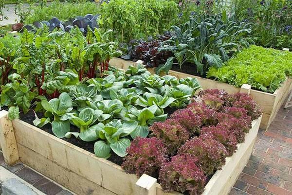 Тонкости выращивания моркови от посева до уборки урожая
