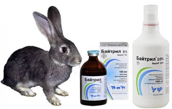 Показания и противопоказания к применению антибиотика байтрил для собак