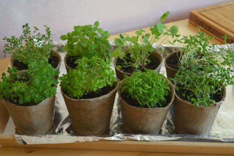 Как вырастить рассаду без земли