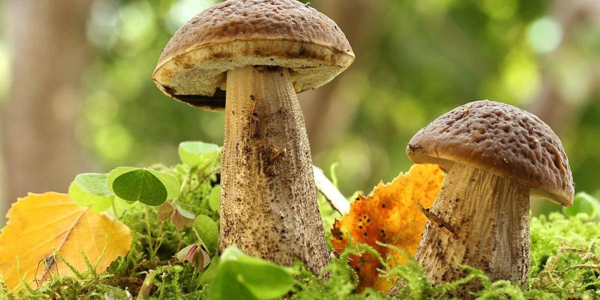 Как правильно собирать грибы и ягоды