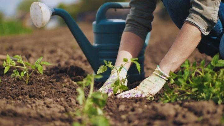 Весенние работы в саду и огороде: что делать в марте, апреле и мае
