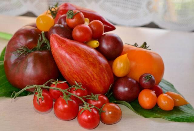 Выбираем томаты для ленинградской области