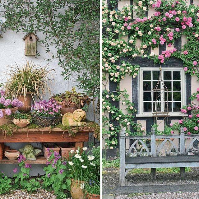 Выращивание левкоя из семян в домашних условиях и фото