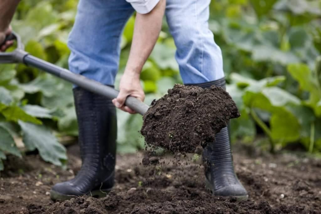 Какие весенние работы в огороде ждут дачников?