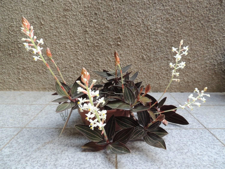 Как размножить орхидею в домашних условиях: 3 действенных способа
