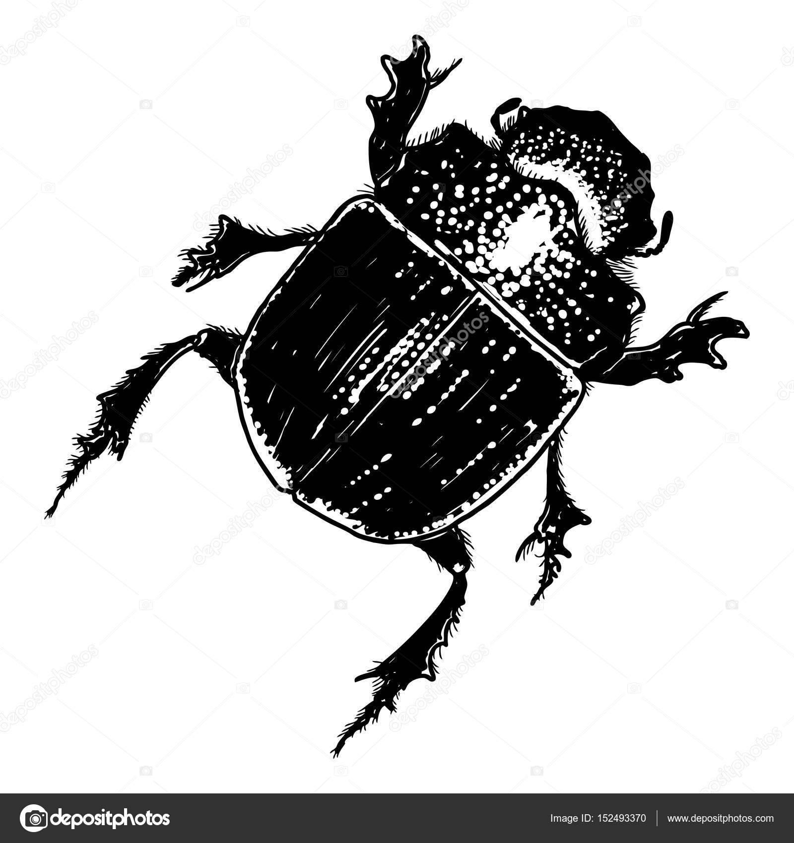 Жук скарабей — священный символ для эффективной борьбы с негативом