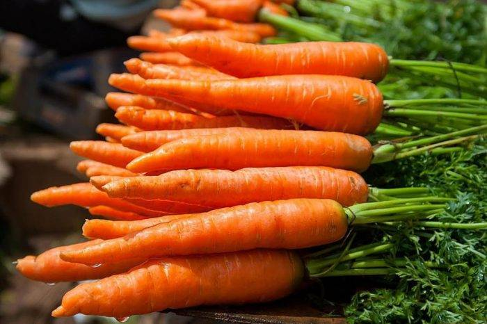 Советы дачникам: как и когда убирать морковь с грядки на хранение?