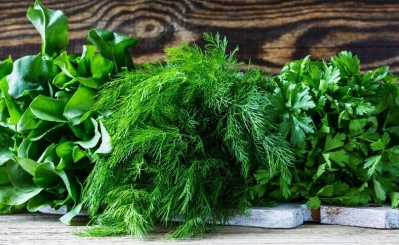 Как надолго сохранить свежую зелень в холодильнике: 8 простых способов