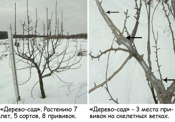 Трёхэтажные деревья - удивительные изобретения!