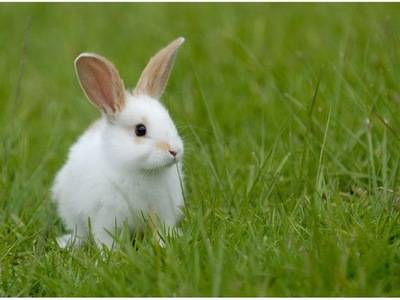 Как правильно давать соликокс кроликам: инструкция