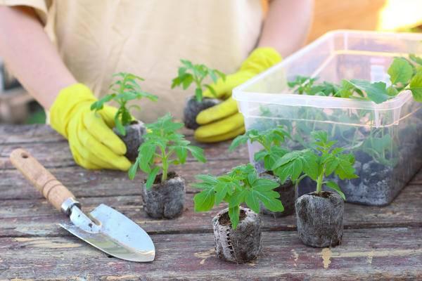 Торфяные таблетки для рассады овощей и цветов