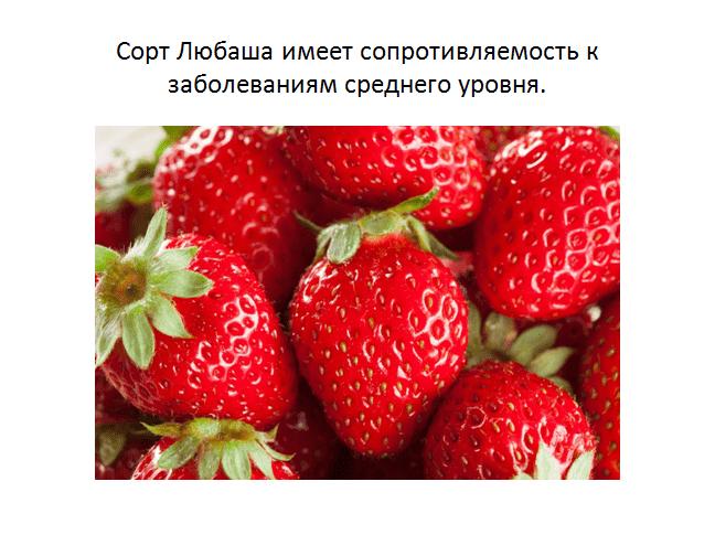 Лучшие сорта ремонтантной клубники 2018-2019