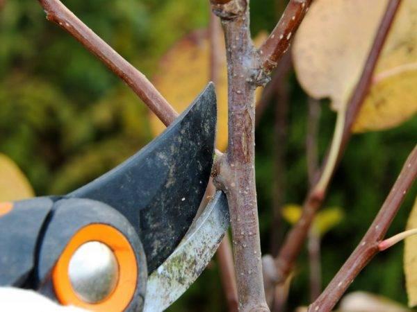 Как правильно посадить грецкий орех весной?