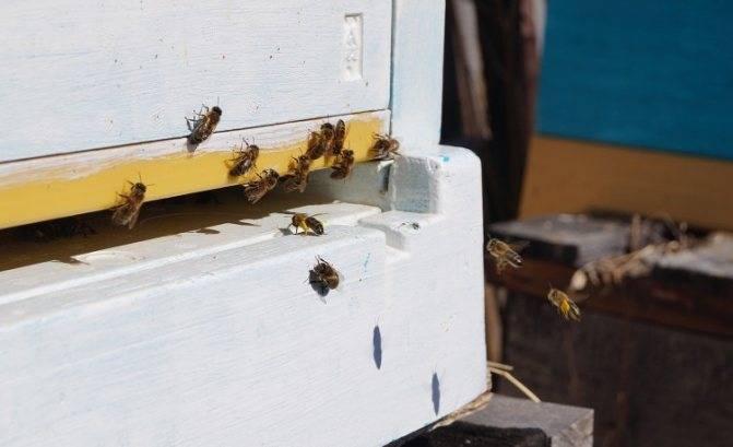 Борьба с вредителями пчел на пасеке