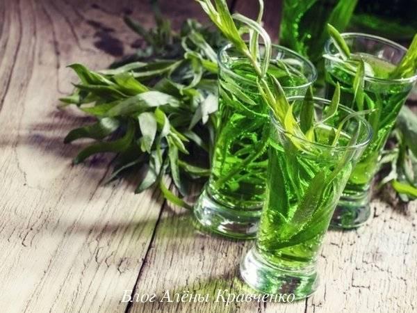 Трава с уникальным вкусом и ароматом — тархун: применение в медицине, для похудения и в кулинарии