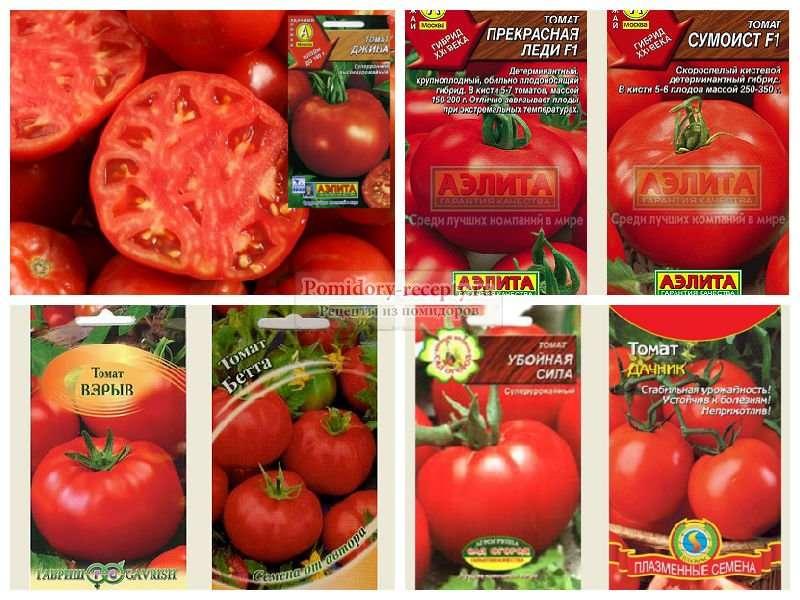 Описание наиболее популярных сортов и гибридов томатов для открытого грунта
